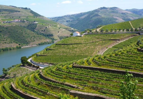 Douro-valley-terraces